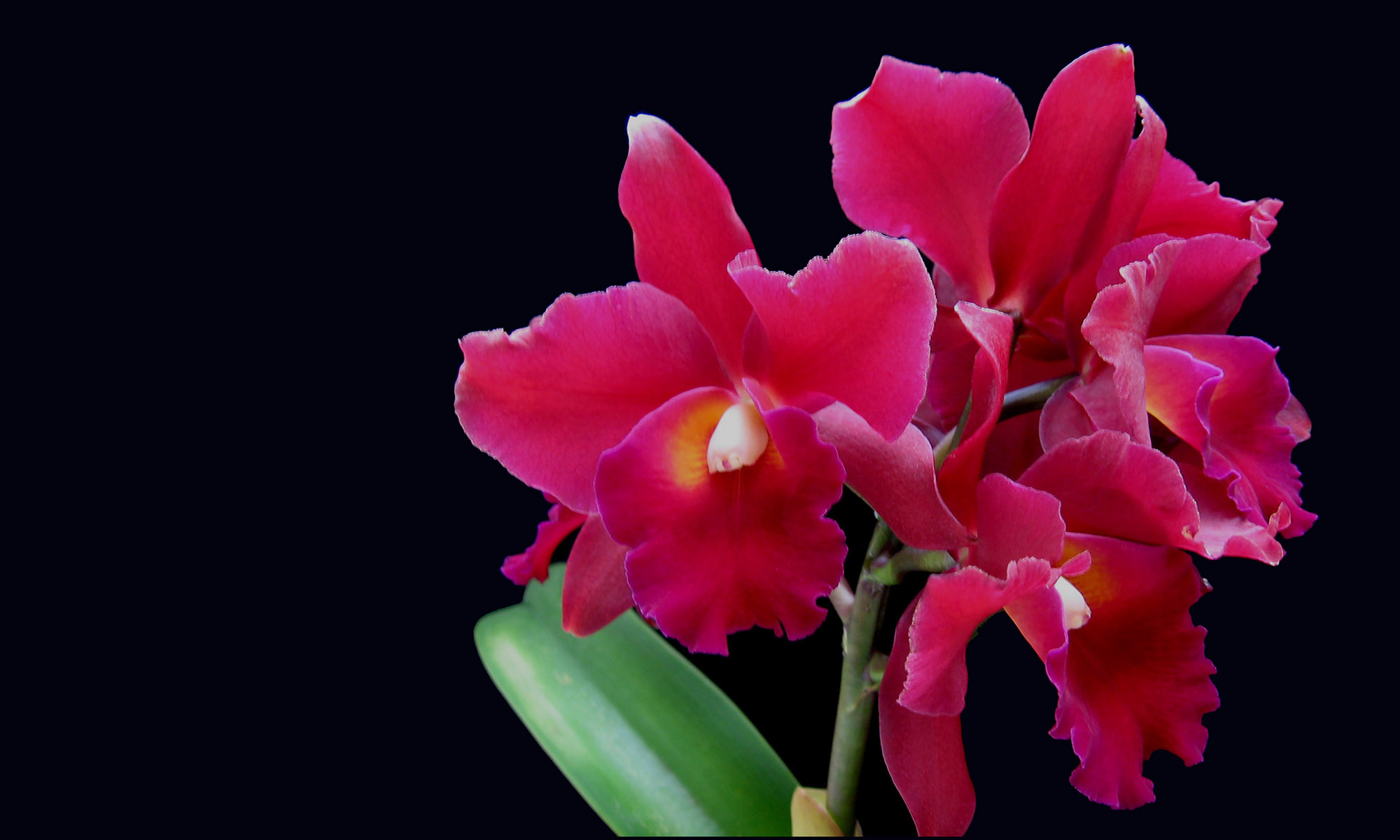 Olympic orchids perfume